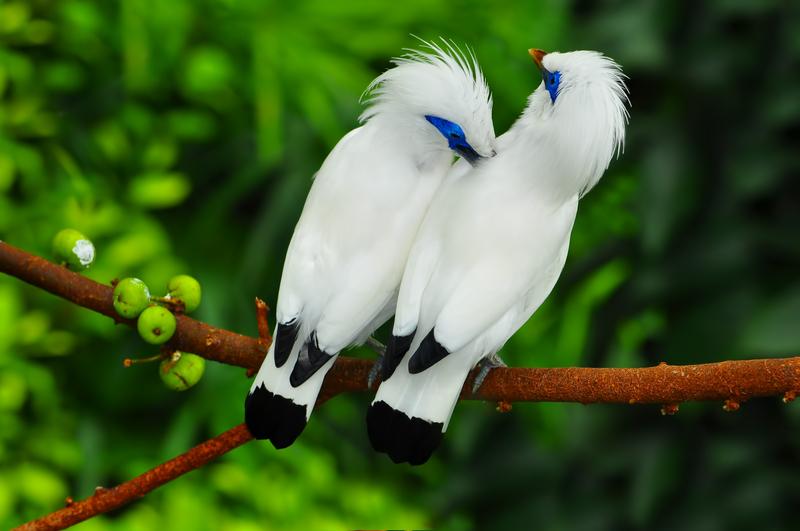 Bali Bird Park in Gianyar, Bali - Indonesia - Mari Bali Tours