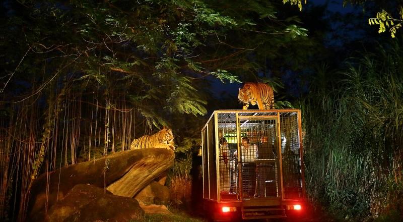 MHD11 – Ubud Tour-Bali Night Safari