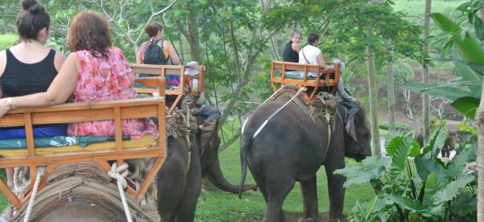 MHD12 – 30 Minutes Elephant Riding-Ubud tour