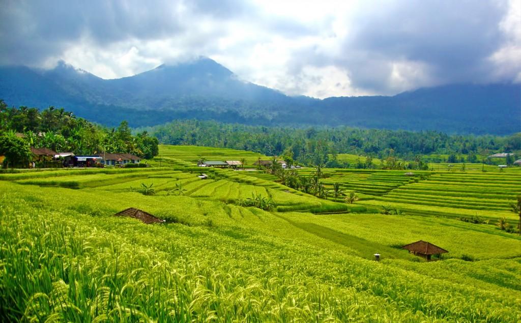 antastic Stunning view of hughest rice terrace in Jatiluwih village while cycling along, Tabanan regency - Bali island - Mari Bali Tours