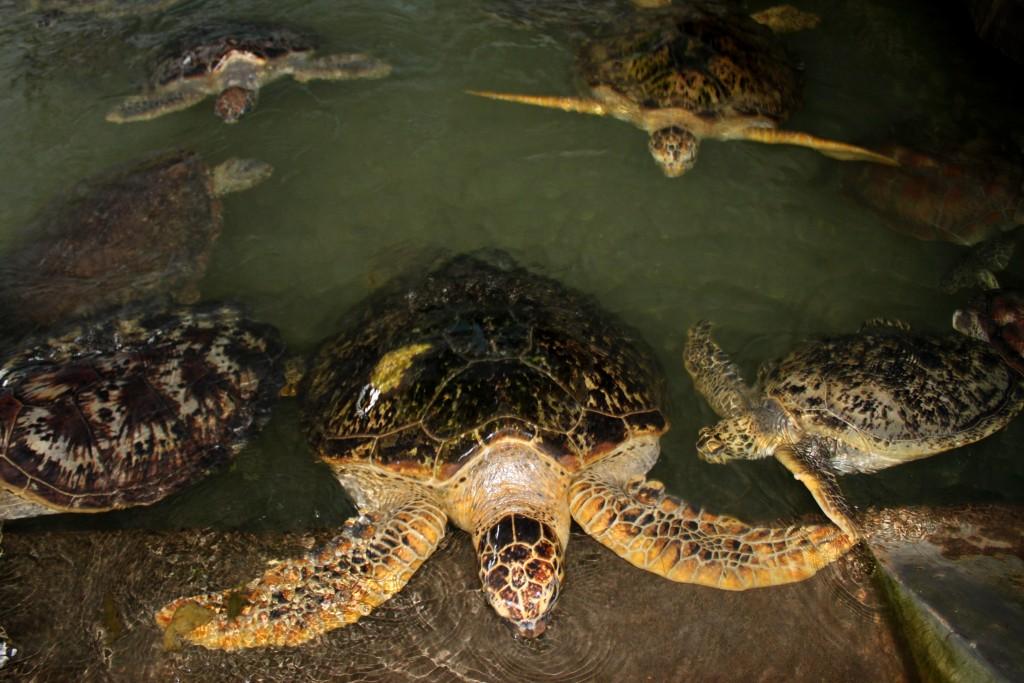 Turtle Island with Glass bottom boat trip - Mari Bali Tours