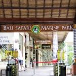 Bali Safari and Marine park in Gianyar, Bali - Mari Bali Tours (143)