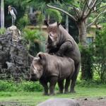 Bali Safari and Marine park in Gianyar, Bali - Mari Bali Tours (35)