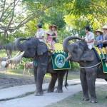 Bali Safari and Marine park in Gianyar, Bali - Mari Bali Tours (81)