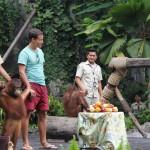 Bali Safari and Marine park in Gianyar, Bali island - Mari Bali Tours (15)