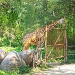 Bali Safari and Marine park in Gianyar, Bali island - Mari Bali Tours (38)