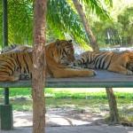 Bali Safari and Marine park in Gianyar, Bali island - Mari Bali Tours (39)