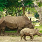 Bali Safari and Marine park in Gianyar, Bali island - Mari Bali Tours (6)
