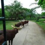 Bali Safari and Marine park in Gianyar, Bali island - Mari Bali Tours (8)