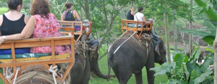 Elephant Riding Tour with Maddy and family, Bali - Mari Bali Tours